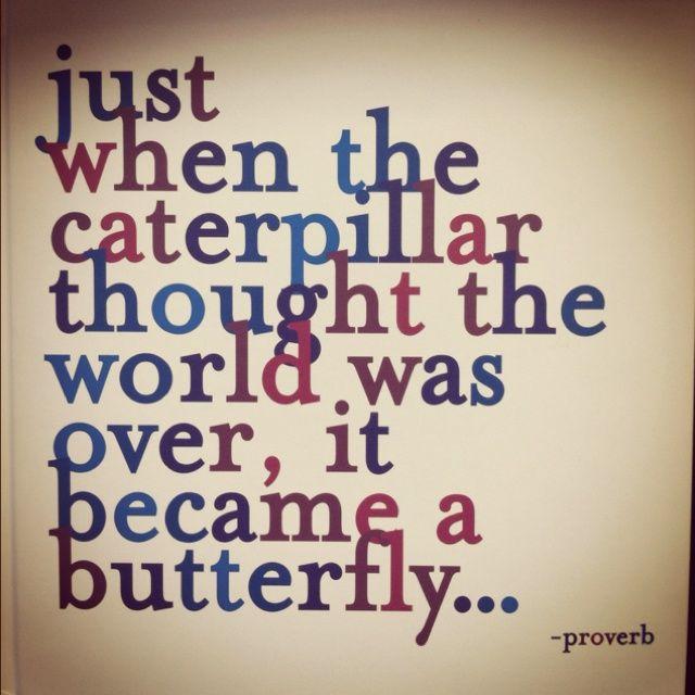 503b4ae5084cc54cbdfe5070cbe1fd5b--butterfly-quotes-a-butterfly